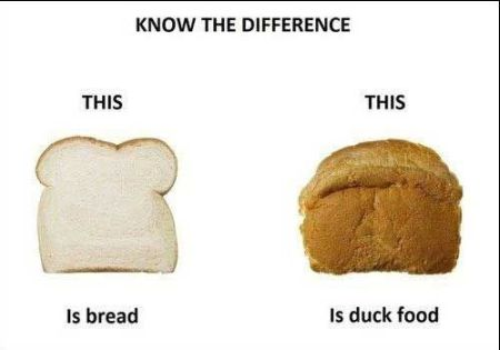 The difference between bread and duck food at PMSLweb.com