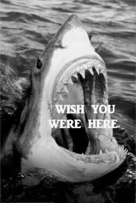 Wish you were here shark humor – Friday laughter at PMSLweb.com