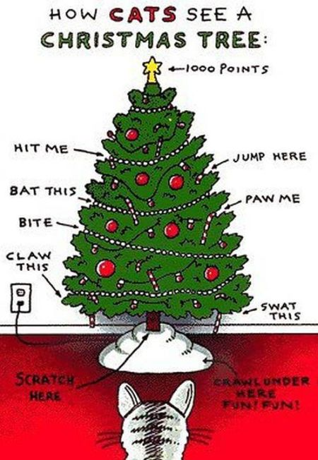 How cats see a Christmas tree at PMSLweb.com