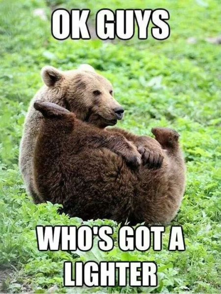Who's got a lighter bear meme at PMSLweb.com