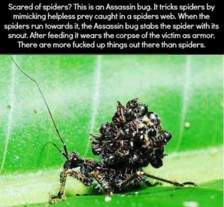 Assassin bug at PMSLweb.com