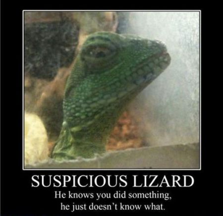 Suspicious lizard demotivational - Hump Day fun at PMSLweb.com