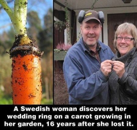 Lost wedding ring on a carrot at PMSLweb.com