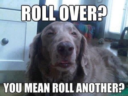 Roll over dog meme – Thursday humor at PMSLweb.com