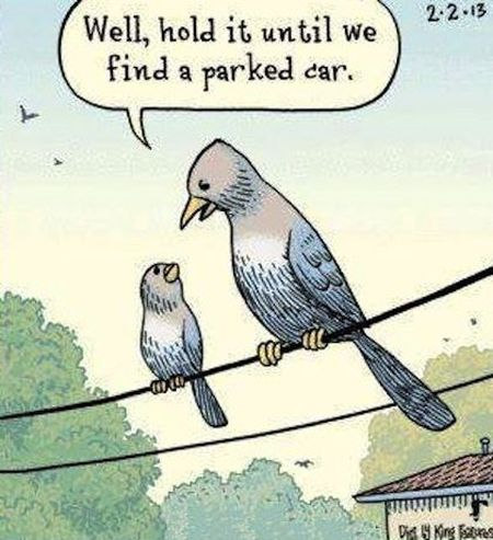 Hold it in funny bird cartoon at PMSLweb.com