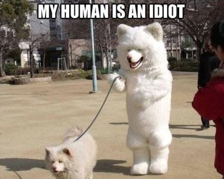 My human is an idiot - Monday fun at PMSLweb.com