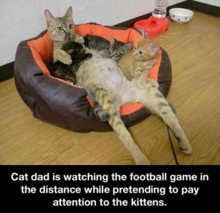 cat dad is watching football funny