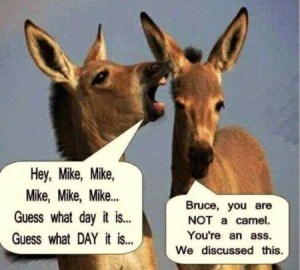 Donkey hey Mike - Hump Day goodies at PMSLweb.com