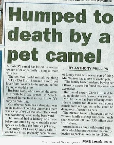 Humped to death by a pet camel at PMSLweb.com