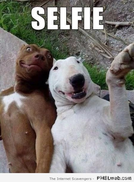 Dog selfie at PMSLweb.com