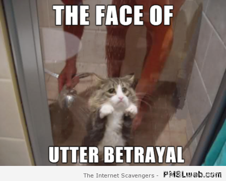 The face of betrayal cat meme at PMSLweb.com