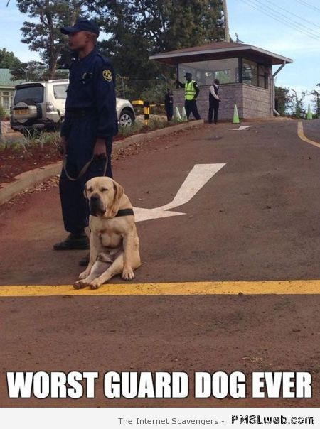 Worst guard dog ever meme at PMSLweb.com