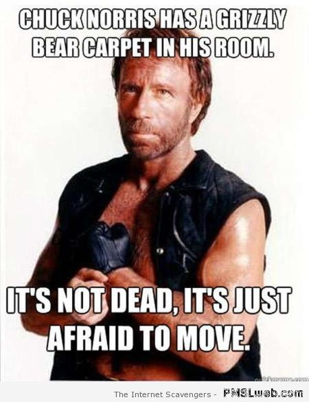 Chuck Norris has a grizzly bear carpet meme at PMSLweb.com