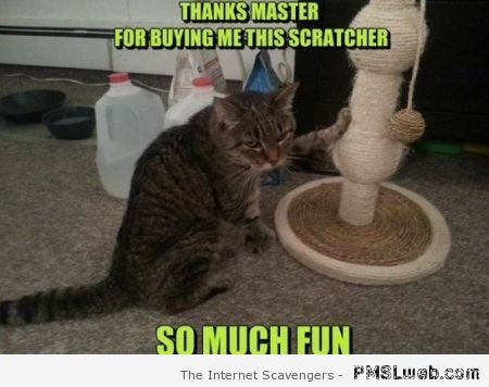 Cat scratching pole meme at PMSLweb.com