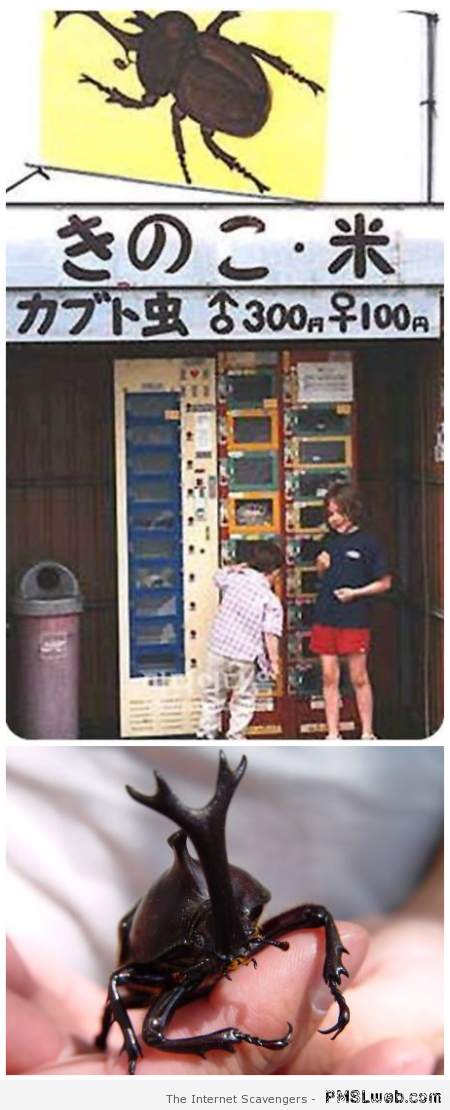Rhinoceros beetle vending machine at PMSLweb.com