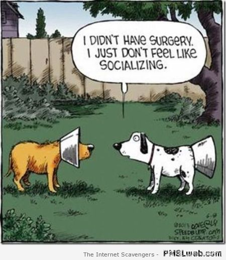 Dog who doesn't want to socialize cartoon at PMSLweb.com