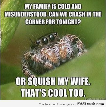 Funny spider meme – Tgif pictures at PMSLweb.com