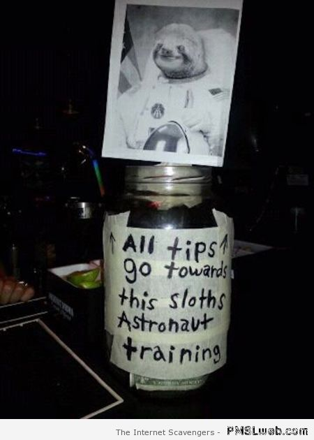 Sloths astronaut training tip at PMSLweb.com