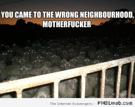 Sheep wrong neighborhood meme at PMSLweb.com