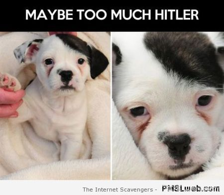 Maybe too much Hitler – Daily humor at PMSLweb.com