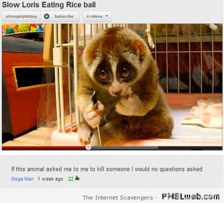 Slow Loris funny Youtube comment at PMSLweb.com