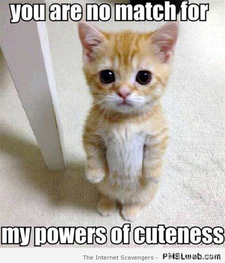 Power of cuteness at PMSLweb.com
