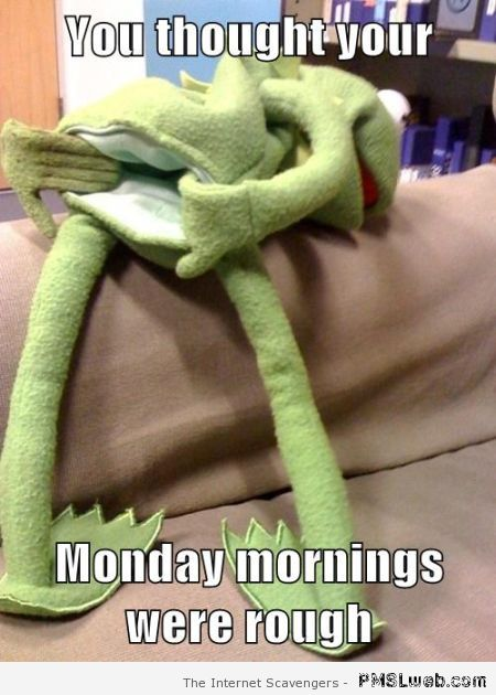 Kermit on Monday's meme – Fun pictures at PMSLweb.com