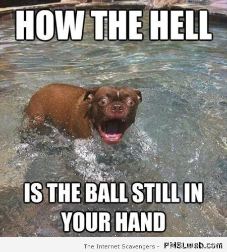How the hell dog meme at PMSLweb.com