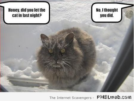Did you let the cat in last night meme at PMSLweb.com