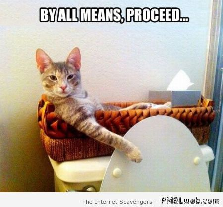 By all means proceed cat meme at PMSLweb.com