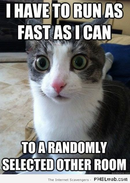 I have to run as fast as I can cat meme at PMSLweb.com