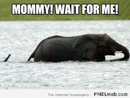 Mommy wait for me meme at PMSLweb.com