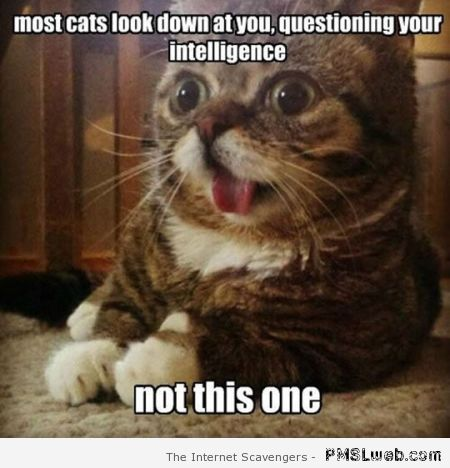 Most cats look down at you meme at PMSLweb.com