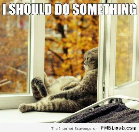 I should do something different cat meme at PMSLweb.com