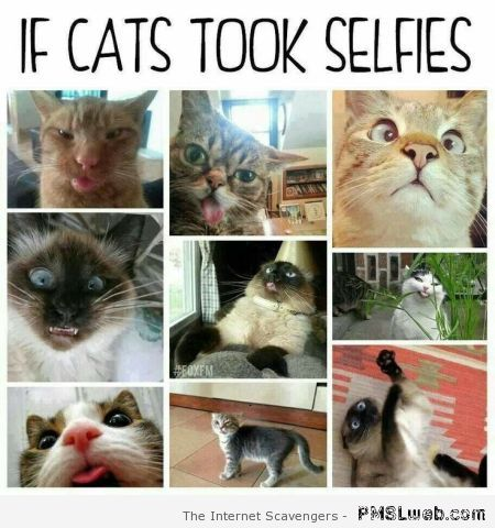 If cats took selfies at PMSLweb.com