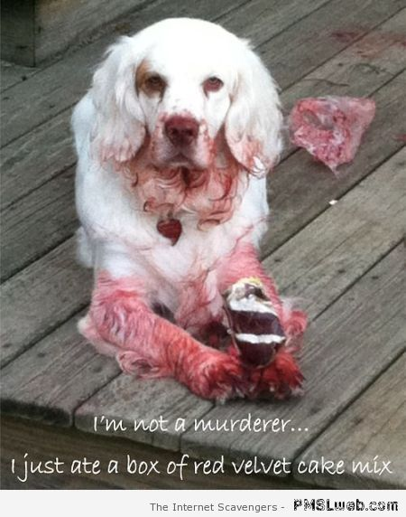 I'm not a murderer dog meme at PMSLweb.com