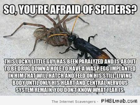 You're afraid of spiders meme at PMSLweb.com