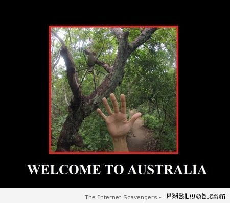 Welcome to Australia spider humor at PMSLweb.com