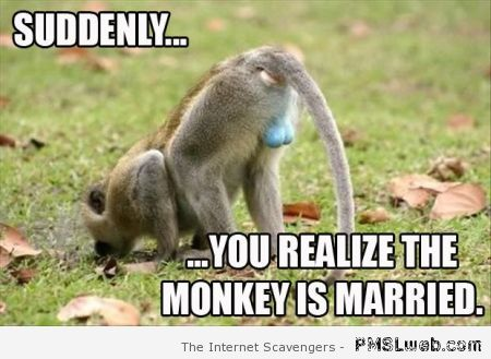Blue balls monkey is married meme at PMSLweb.com