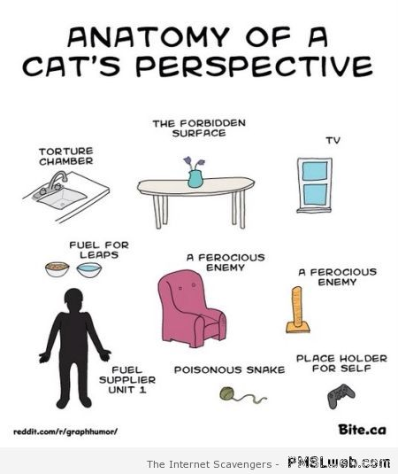 Anatomy of a cats perspective at PMSLweb.com
