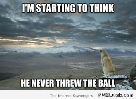 He never threw the ball dog meme at PMSLweb.com