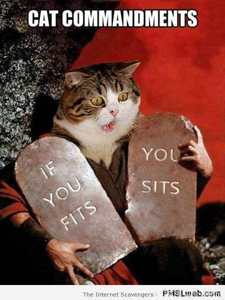 Cat commandments meme at PMSLweb.com