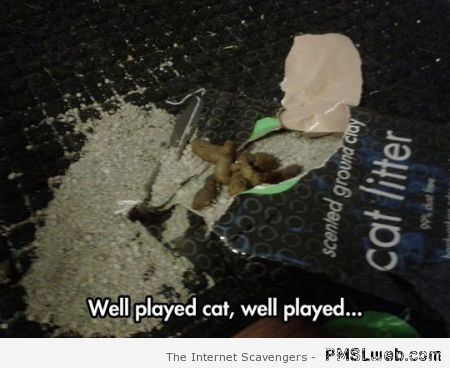 Cat litter fail meme – Hilarious Hump day at PMSLweb.com