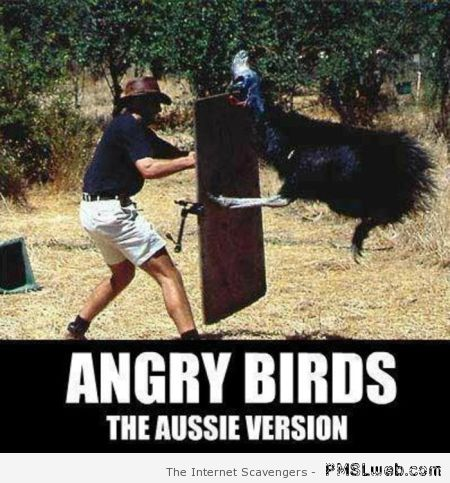 Angry birds the Aussie version – Welcome to Straya at PMSLweb.com