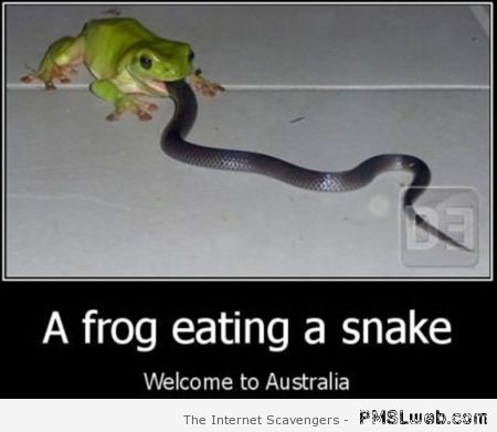 A frog eating a snake – Welcome to Straya at PMSLweb.com