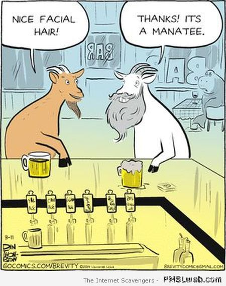Goat with manatee cartoon – Funny Hump day pictures at PMSLweb.com