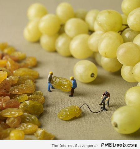 How raisins are made  - Hump day funny pics at PMSLweb.com