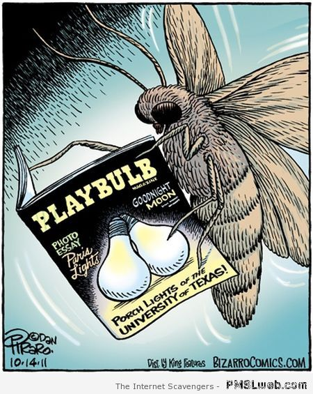Playboy for moths cartoon at PMSLweb.com