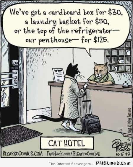 Cat hotel cartoon – Thursday funny pictures at PMSLweb.com