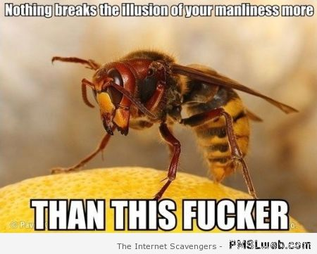Breaking the illusion of your manliness meme at PMSLweb.com